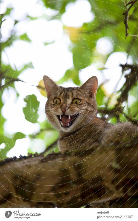Katze klettert und jagt auf einem Baum Natur Landschaft Tier Tierjunges Fröhlichkeit Lebensfreude hoch niedlich Jagd Tierliebe