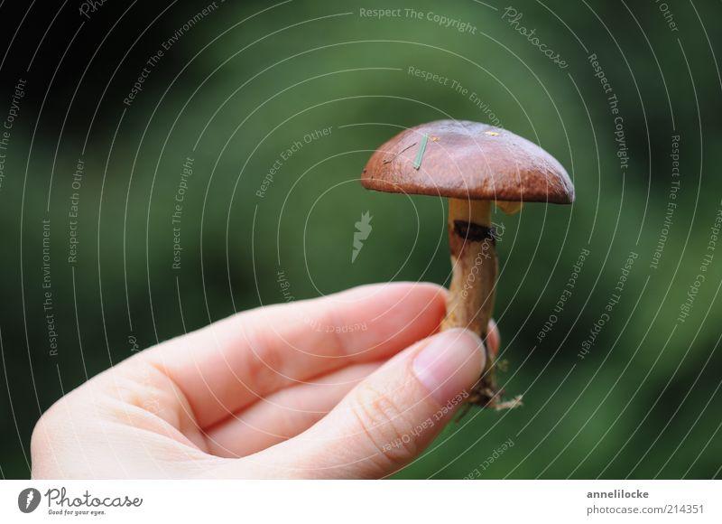 Butterpilz Lebensmittel Ernährung Bioprodukte Vegetarische Ernährung Ausflug Mensch Hand Finger Umwelt Natur Pflanze Sommer Herbst Pilz lecker braun essbar