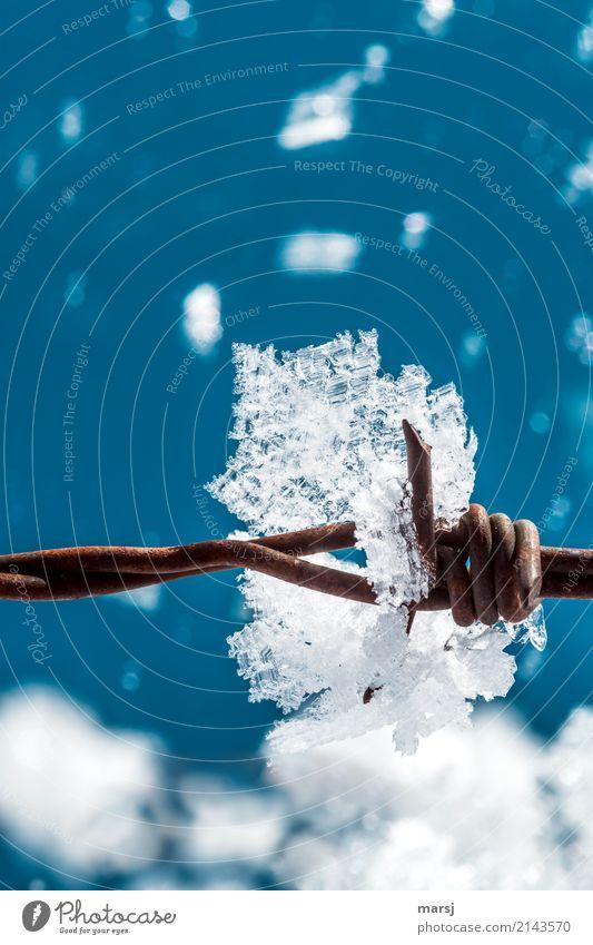 Die Schöne und das Biest Leben Winter Eis Frost Schnee Eiskristall Stacheldrahtzaun Stahl Rost Spitze glänzend leuchten außergewöhnlich dünn authentisch