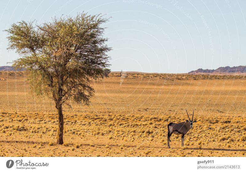Im Schatten Ferien & Urlaub & Reisen Ausflug Abenteuer Ferne Safari Expedition Umwelt Natur Landschaft Erde Sand Himmel Sonnenlicht Frühling Sommer Wärme Dürre
