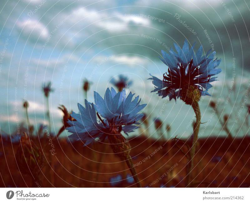 les fleurs du mal Lifestyle Umwelt Natur Landschaft Pflanze Himmel Wolken Gewitterwolken Sommer Herbst Klimawandel schlechtes Wetter Unwetter Wind Sturm Blume