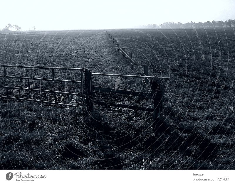 Im Ochsenmoor, südlich des Dümmers Herbst Wiese Nebel Weide Zaun Moor schlechtes Wetter