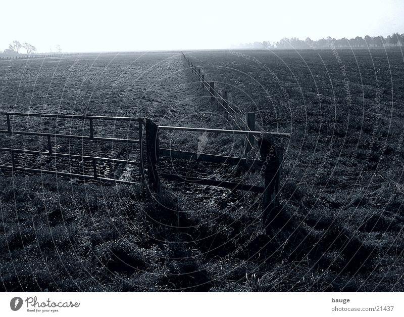 Im Ochsenmoor, südlich des Dümmers Moor Nebel schlechtes Wetter Wiese Zaun Herbst Weide