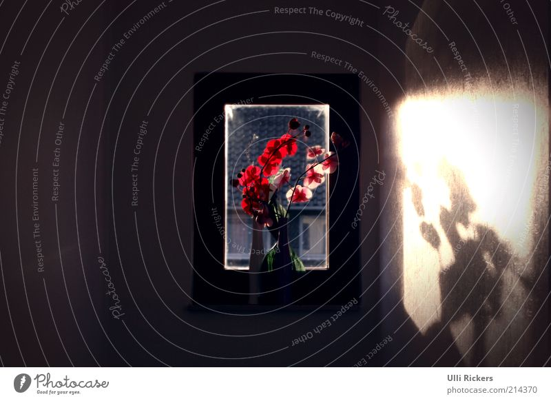 [] Pflanze rot Blume Blatt Haus dunkel Fenster Blüte Gebäude trist Häusliches Leben Innenarchitektur Duft Blumenstrauß Treppenhaus Schatten