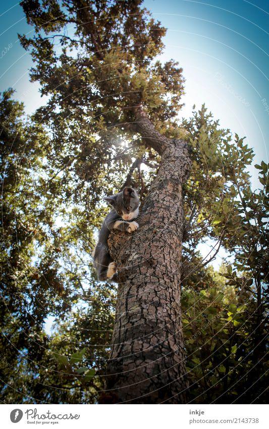 Korsisches Kätzchen Katze Natur Pflanze Sommer Sonne Baum Tier Wald Tierjunges Frühling Gefühle klein oben Angst Park Wildtier