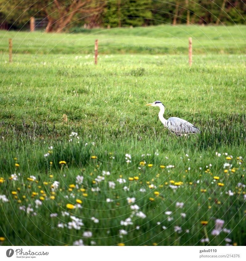 bird Umwelt Pflanze Tier Gras Blüte Wiese Jagd Vogel Blumenwiese Zaun grün Leben Klima Klimaschutz wild Landwirtschaft gelb weiß Freiheit Umweltschutz Weide