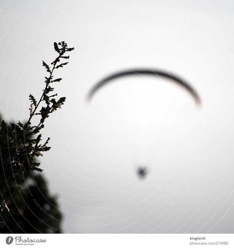 Flying away Gleitschirmfliegen 1 Mensch Himmel Sträucher frei grau Sehnsucht Freiheit einzigartig Vertrauen Farbfoto Gedeckte Farben Außenaufnahme Abend Gras