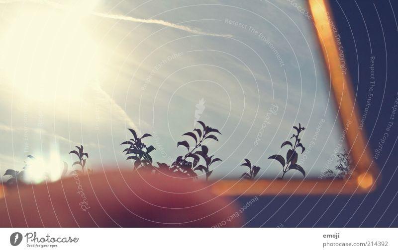 Herbstgold Himmel Sonne blau Pflanze Blatt Wärme Sträucher Spiegel Jahreszeiten Schönes Wetter Umwelt
