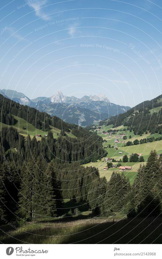 Turbachtal Natur Sommer Baum Landschaft Erholung Ferne Wald Berge u. Gebirge Leben Sport Freizeit & Hobby Ausflug wandern genießen Schönes Wetter Fahrradfahren