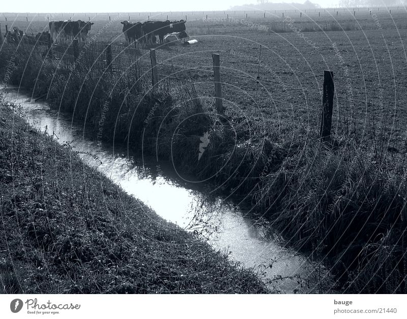 Entwässerungsgraben im Moor Herbst Wiese Nebel schlechtes Wetter Rind Graben