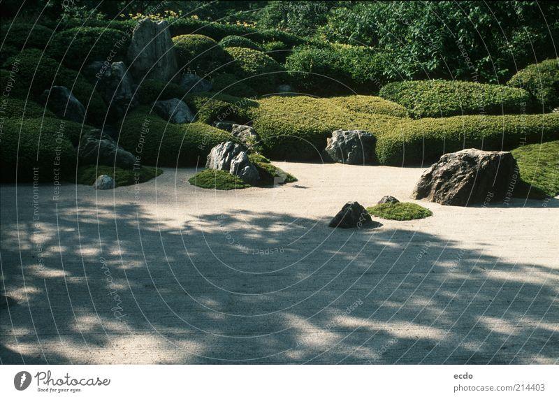 weiß Baum grün Pflanze Sommer Ferien & Urlaub & Reisen ruhig Garten grau Stein Wärme Landschaft Zufriedenheit Design elegant Felsen