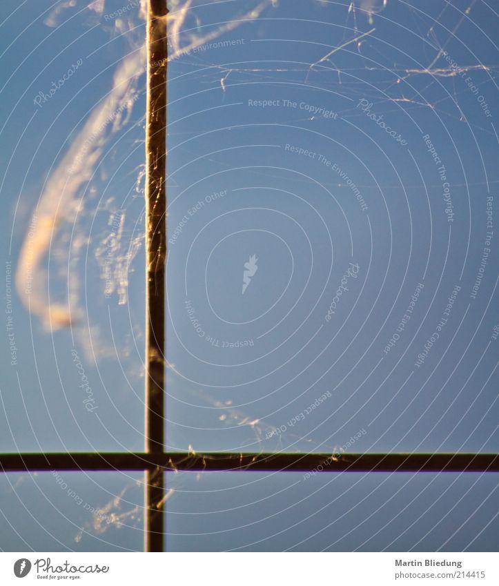 Kreuznaht Natur blau ruhig Metall braun frei Zeichen Zaun Kreuz Material gefangen Eisen Ekel Spinnennetz Spinngewebe