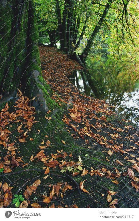 cong woods Natur ruhig Blatt Wald Herbst See Fluss Idylle Seeufer Baumstamm Moos Flussufer Wurzel Waldboden