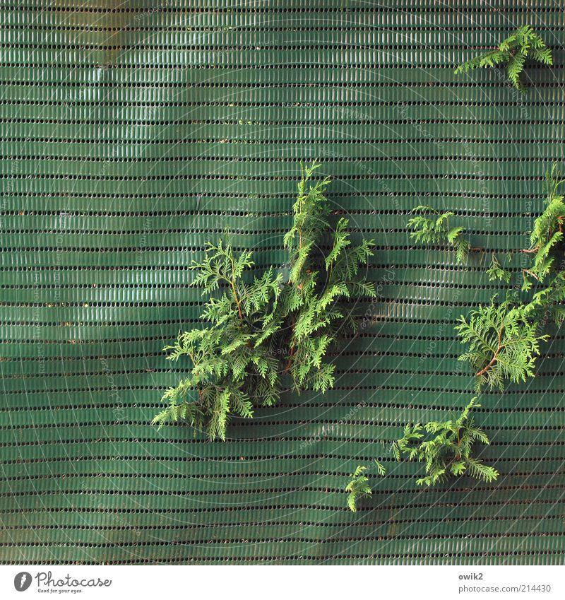 Ziemlich durchwachsen Garten Gartenzaun Begrenzung Grenze schließen Schutz Natur Pflanze Klima Schönes Wetter Sträucher Grünpflanze Wacholder entdecken hängen