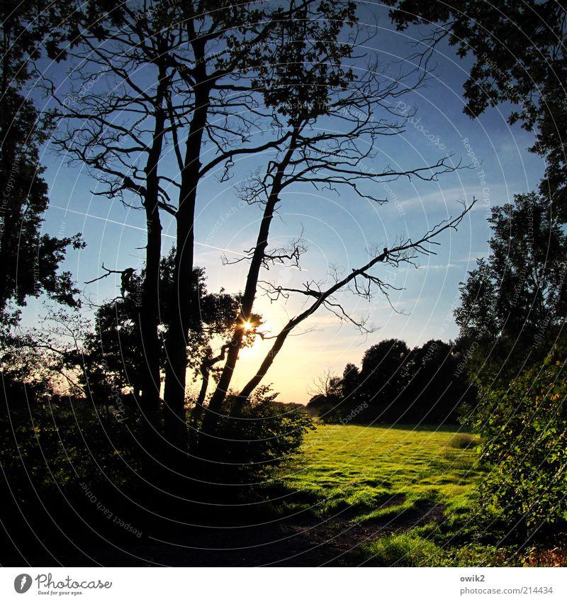 Später Sommer Umwelt Natur Landschaft Pflanze Erde Himmel Wolken Horizont Sonnenaufgang Sonnenuntergang Herbst Klima Schönes Wetter Baum Gras Sträucher Blatt