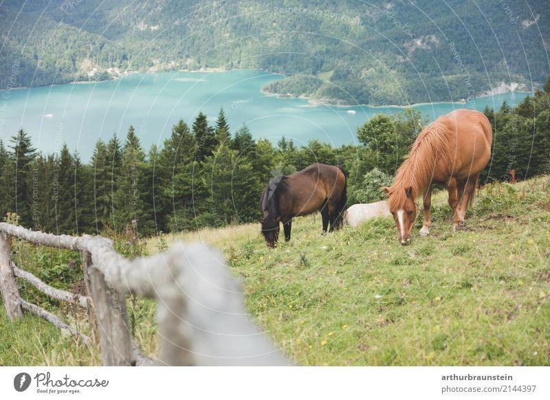 Pferde grasen am Berg Natur Ferien & Urlaub & Reisen Sommer Landschaft Baum Tier Wald Berge u. Gebirge Holz Tourismus See Freizeit & Hobby Ausflug wandern Feld