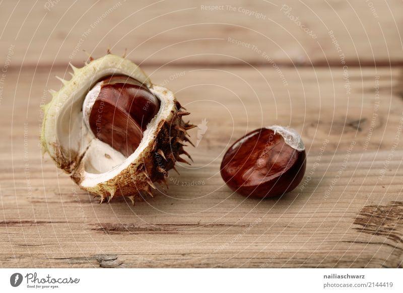 Rosskastanien in der Schale Bioprodukte Vegetarische Ernährung Natur Herbst Pflanze Kastanie Nuss Holz glänzend groß natürlich rund schön braun gelb Kraft brown