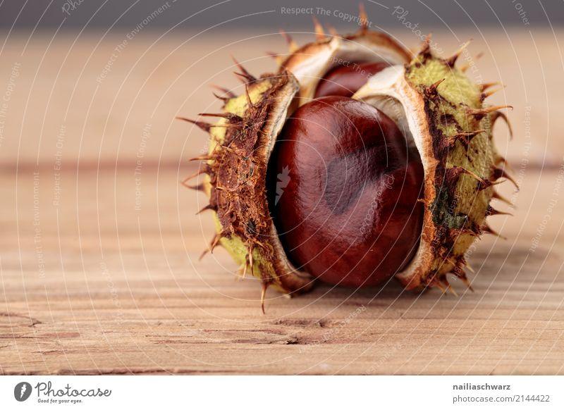 Kastanienzeit Lebensmittel Bioprodukte Vegetarische Ernährung Herbst Pflanze Baum Grünpflanze Nutzpflanze Holz einfach glänzend nah natürlich rund schön braun