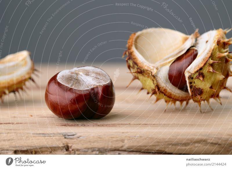 Rosskastanie Kastanienbaum Natur Pflanze Herbst Holz glänzend natürlich stachelig braun grau Kraft Farbe brown Stachel Hülle Farbfoto Studioaufnahme