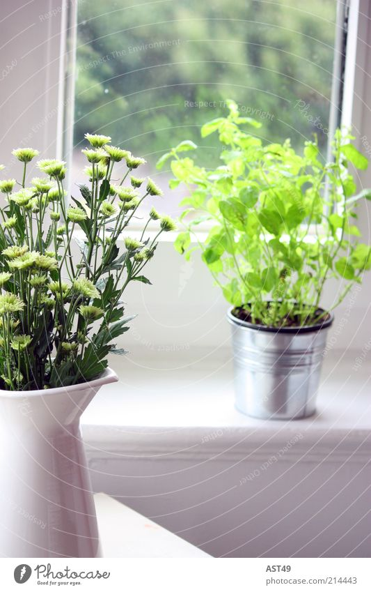Fensterbank Häusliches Leben Wohnung Innenarchitektur Dekoration & Verzierung Raum Pflanze Frühling Sommer Schönes Wetter Blume Blatt Grünpflanze Nutzpflanze