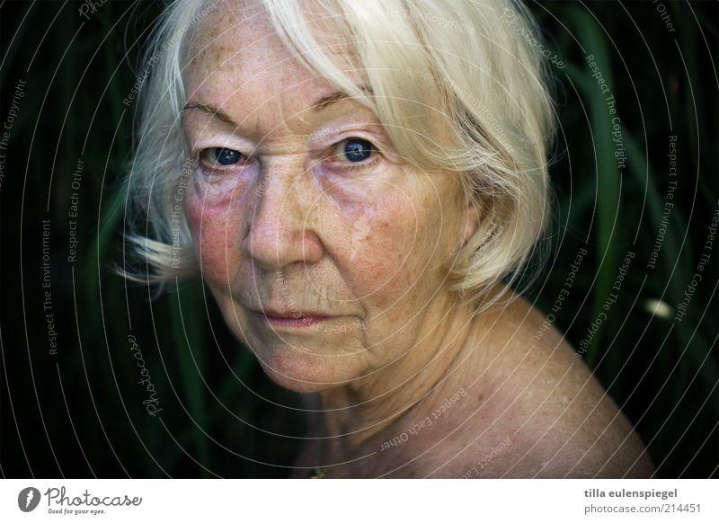 wissend Mensch Frau alt ruhig Gesicht Senior Haut natürlich authentisch Vergänglichkeit beobachten Hautfalten Großmutter 60 und älter Weiblicher Senior Haarschnitt