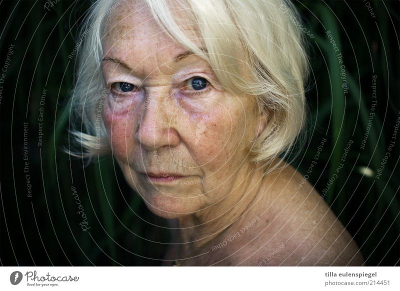 wissend Weiblicher Senior Frau 1 Mensch 60 und älter weißhaarig beobachten alt authentisch natürlich Vergänglichkeit Haarschnitt Hautfalten Großmutter ruhig