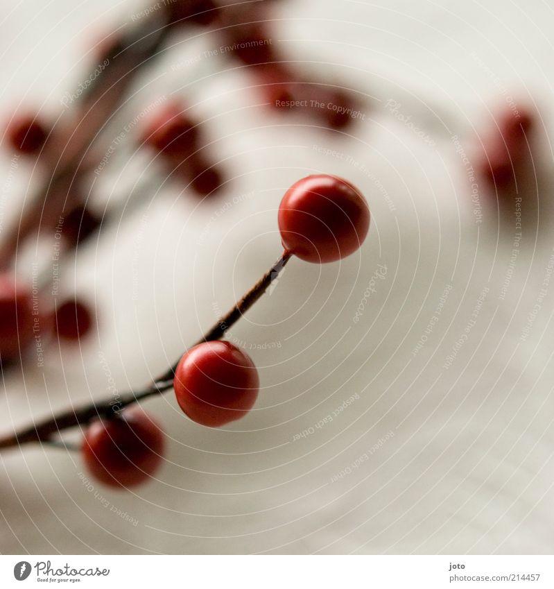 dekorativ Natur Pflanze rot Winter ruhig Herbst Wärme Hintergrundbild Design Frucht Sträucher Dekoration & Verzierung Kugel Postkarte Perle