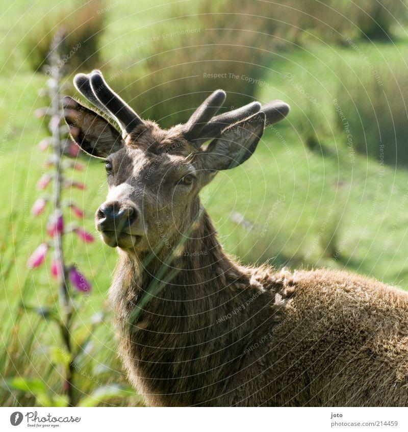 anmut Natur schön Landschaft Tier ruhig Traurigkeit Park Wildtier elegant frei ästhetisch Warmherzigkeit beobachten einzigartig Neugier Fell