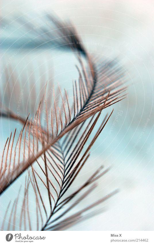 Nandu(u)-Feder Tier weich filigran zart Vogel Hintergrundbild Flaum Daunen Farbfoto Nahaufnahme abstrakt Muster Strukturen & Formen Menschenleer