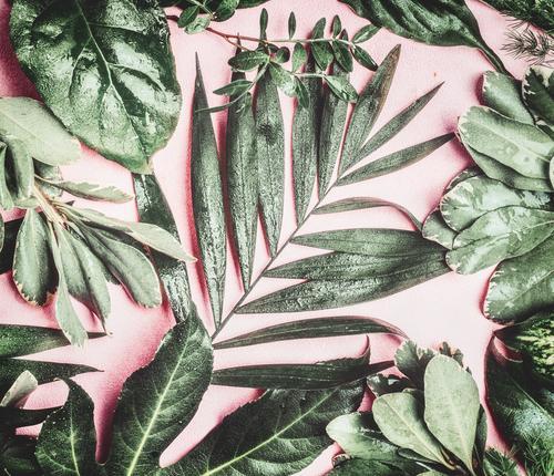 Grüne tropische Dschungelblätter Lifestyle Stil Design Ferien & Urlaub & Reisen Sommer Strand Natur Pflanze Blatt Urwald Oase Dekoration & Verzierung rosa