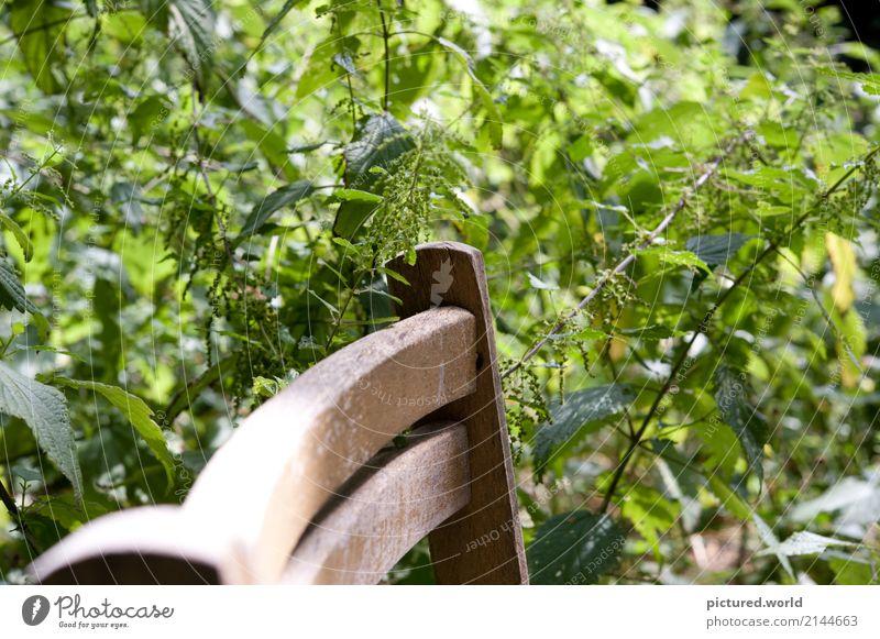 Von der Natur zurückerobert Abenteuer Expedition Pflanze Sonne Sommer Klimawandel Schönes Wetter Sträucher Blatt Blüte Wildpflanze Wald Stuhl Holzstuhl alt