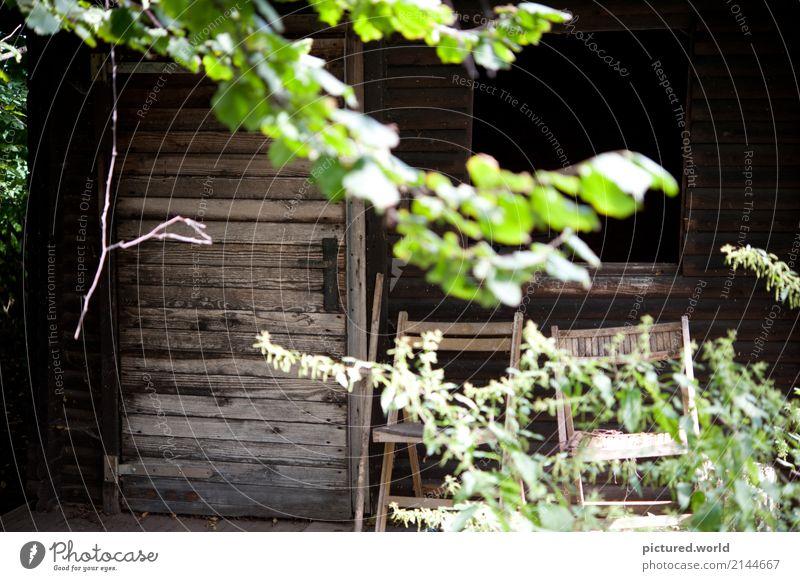 Vergessen aber nicht vergangen Abenteuer Natur Pflanze Sonnenlicht Sommer Klimawandel Baum Sträucher Blatt Wildpflanze Wald Menschenleer Hütte Ruine Fassade