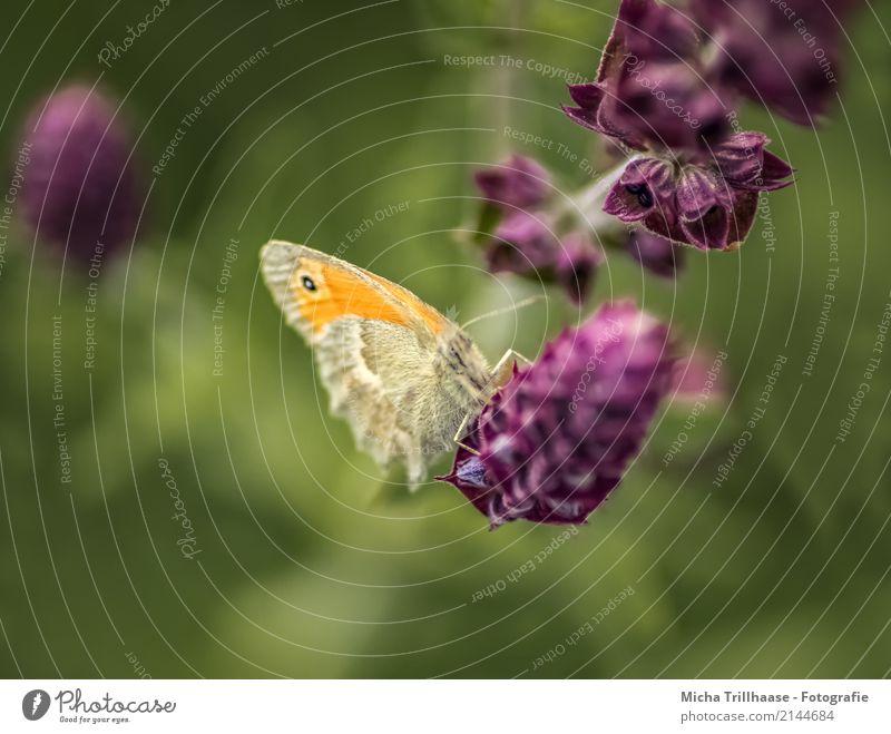 Beobachtet Umwelt Natur Pflanze Tier Sonne Sonnenlicht Sommer Schönes Wetter Blume Blatt Blüte Wildpflanze Wiese Wildtier Schmetterling Tiergesicht Flügel Beine