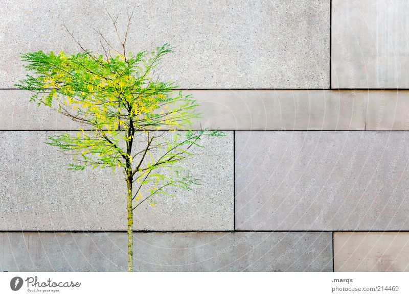 Reversal Natur schön Baum ruhig Einsamkeit Herbst Wand Holz Stil Mauer elegant Fassade Beton ästhetisch Wandel & Veränderung leuchten