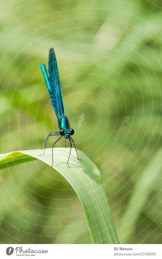 Libelle #2 Natur Pflanze blau Sommer grün Landschaft Tier Blatt gelb Frühling Wiese Garten See Park elegant Wildtier