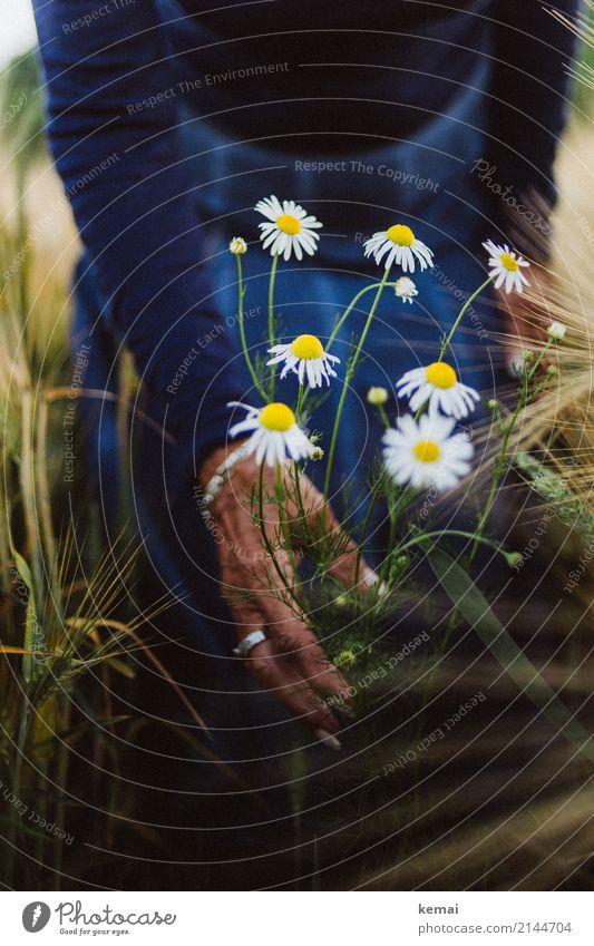 Margeriten im Feld Lifestyle Stil harmonisch Wohlgefühl Zufriedenheit Sinnesorgane Erholung ruhig Freizeit & Hobby Spielen Ausflug Freiheit Mensch feminin Frau