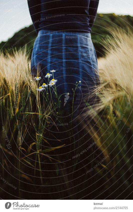 Ein Rock im Feld Frau Mensch Natur blau Sommer Blume Erholung ruhig dunkel Erwachsene Lifestyle feminin Stil Freiheit Ausflug Freizeit & Hobby