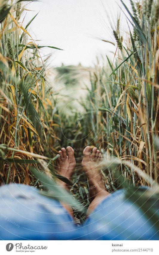 Sommerfüße im Feld Lifestyle harmonisch Wohlgefühl Zufriedenheit Sinnesorgane Erholung ruhig Freizeit & Hobby Ausflug Freiheit Mensch Fuß 1 Umwelt Natur Pflanze