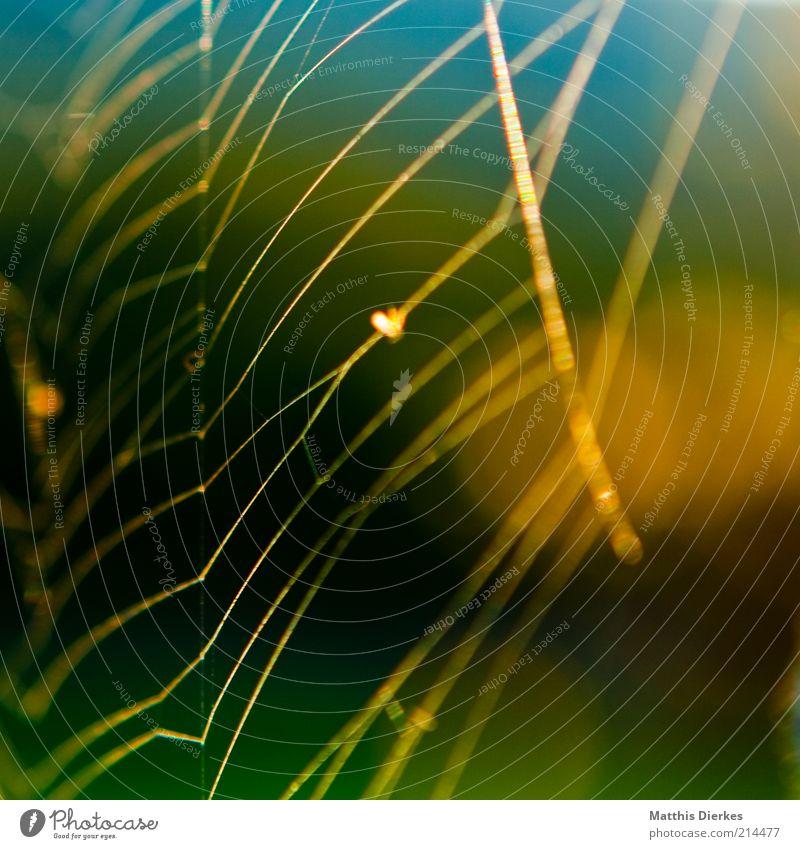 Netz Umwelt Natur ästhetisch fantastisch Spinnennetz Netzwerk fadenförmig Farbfoto Außenaufnahme Nahaufnahme Detailaufnahme Menschenleer Morgen Morgendämmerung