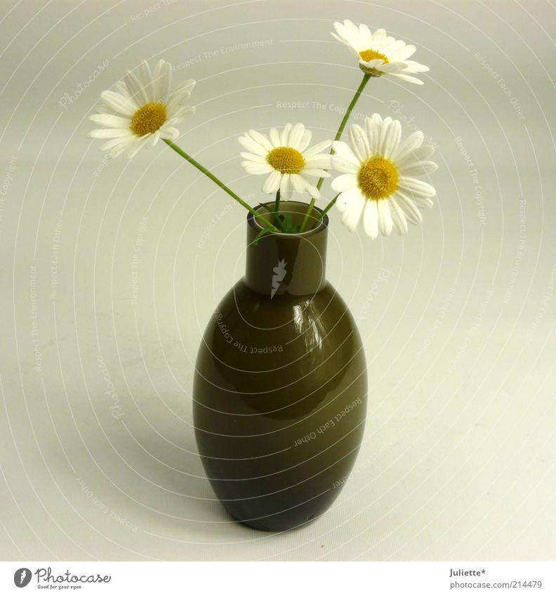 Vorfreude auf den Frühling! Sommer Pflanze Blume Blüte Grünpflanze Glas ästhetisch Duft nah braun gelb grün weiß Design Natur Wachstum Farbfoto Innenaufnahme