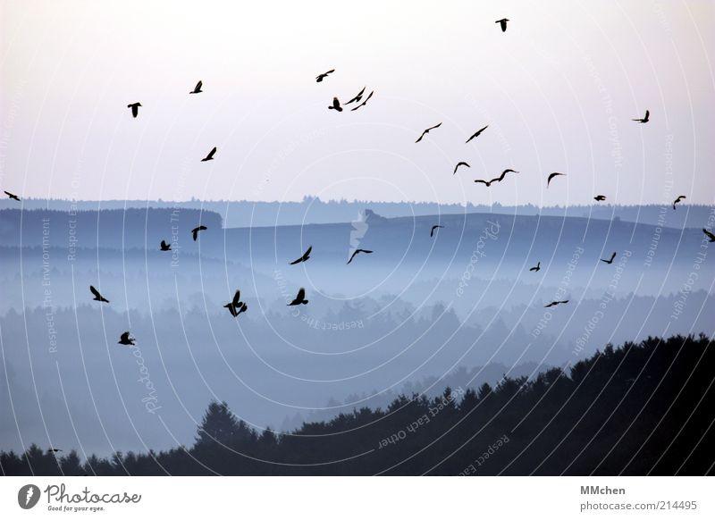 aufgeschreckt Natur Himmel blau Ferien & Urlaub & Reisen schwarz Ferne Wald kalt Herbst Berge u. Gebirge Landschaft Stimmung Vogel Nebel fliegen Horizont