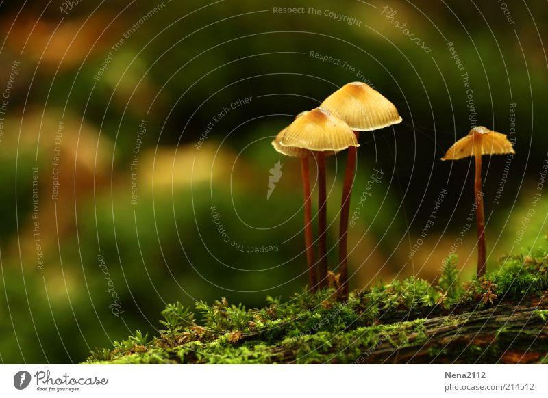 Eins gegen Drei Natur grün Herbst braun wild Baumstamm Pilz Moos Baumrinde Oktober Waldboden September Pilzhut Umwelt Detailaufnahme Pflanze