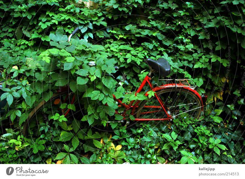 symbiose Natur grün Pflanze rot Fahrrad Umwelt Zeit Lifestyle Ende einzigartig außergewöhnlich Mobilität Parkplatz ökologisch