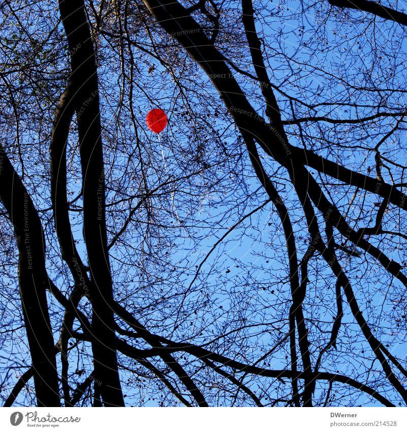 der 100ste Luftballon Stil harmonisch Umwelt Natur Landschaft Himmel Sommer Schönes Wetter Baum Wald Fluggerät Ballone fangen fliegen leuchten träumen fest blau