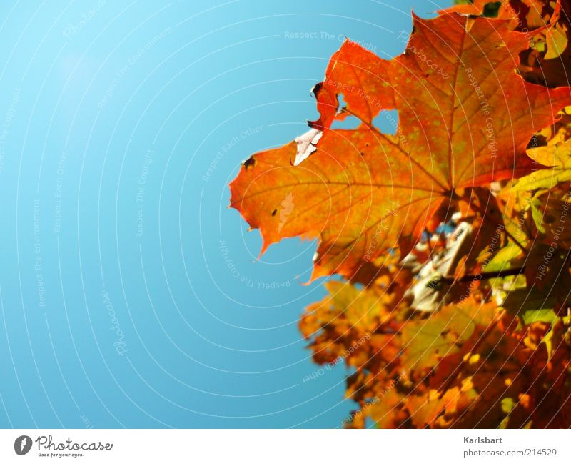 himmel. es herbstet. Himmel Natur Baum rot Freude Blatt gelb Erholung Umwelt Leben Herbst Bewegung Lifestyle Wandel & Veränderung Vergänglichkeit Schönes Wetter