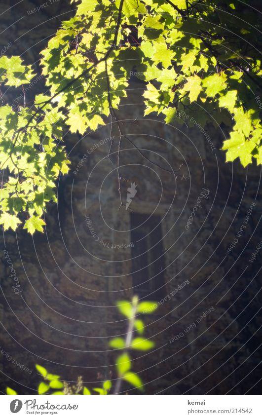 Fotosynthese in Aktion Umwelt Natur Pflanze Sonnenlicht Sommer Schönes Wetter Wärme Baum Blatt Grünpflanze Wildpflanze Park Turm Bauwerk Gebäude Mauer Wand