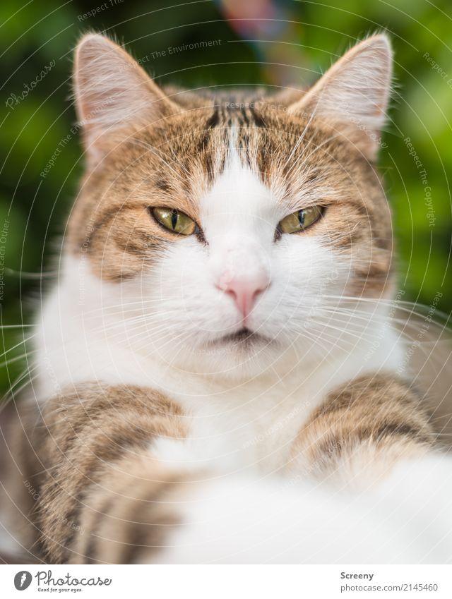 Nur...nicht...blinzeln.... Natur Tier Haustier Katze 1 beobachten Blick Gelassenheit geduldig ruhig Farbfoto Außenaufnahme Nahaufnahme Menschenleer Tag