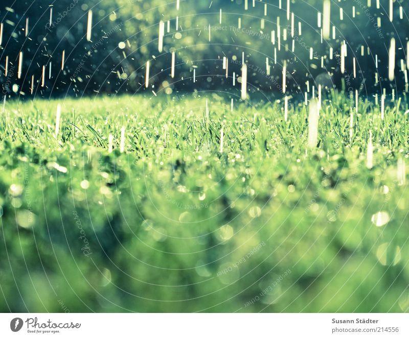Sommerregen Wasser Wiese Gras Garten Regen nass Wassertropfen Erde Sträucher Tropfen fallen natürlich außergewöhnlich Schönes Wetter gießen