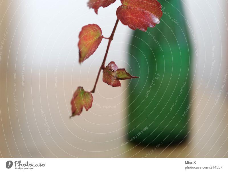 weinblatt Flasche Dekoration & Verzierung Pflanze Blatt Nutzpflanze Wachstum Wein Weinflasche Weinblatt Vase Blumenvase Farbfoto Innenaufnahme Nahaufnahme