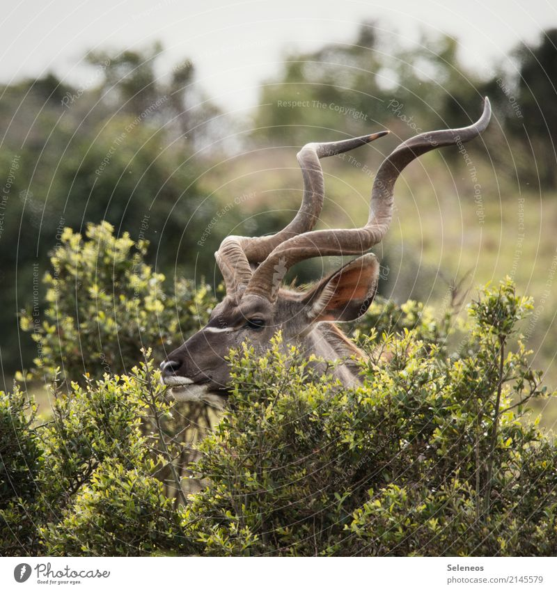 gesundes Frühstück im Park Natur Ferien & Urlaub & Reisen Sommer Tier Ferne Umwelt natürlich Tourismus Ausflug Wildtier Sträucher Abenteuer Sommerurlaub